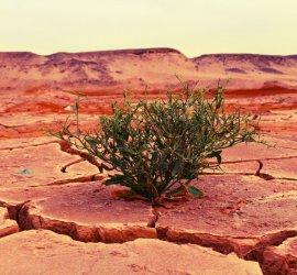Desert - ©naturfreund_pics / Pixabay